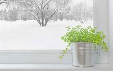 Уход за комнатными цветами зимой