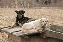 Как защитить собаку от догхантеров?