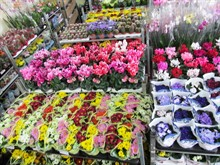 Магазины «Зеленый Дом» готовы к международному женскому дню, 8 марта!