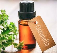 Эфирные масла от садовых вредителей