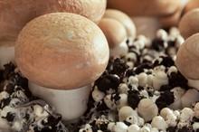 Как вырастить грибы на подоконнике?