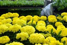 Поступление рассады однолетних цветов
