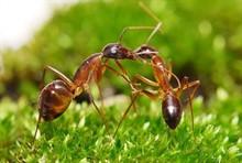 Средства от муравьёв