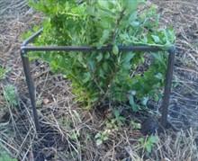 Делаем опору для растений своими руками