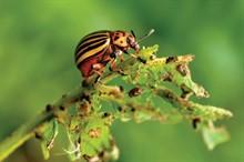 Средства защиты от колорадского жука в наличии