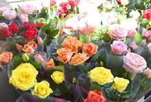 Поступление горшечных цветов 19.06.19