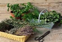 Дачная аптека (лекарственные травы)