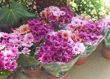 Большое поступление цветов в горшках