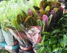 Новый привоз горшечных растений