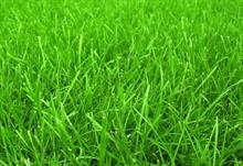 Можно ли сеять газон осенью?