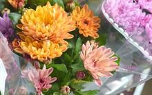 Поступление горшечных цветов 29.08.19
