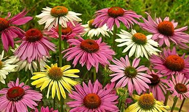 Растения для солнечного засушливого участка