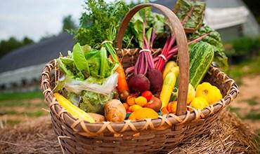 Органическое земледелие: тренд или необходимость