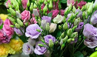 Секреты выращивания эустомы (ирландской розы)
