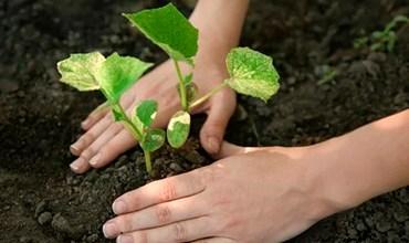 Какую рассаду можно высадить в июне в открытый грунт?