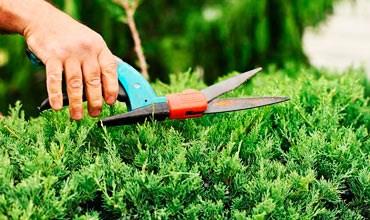 Секреты правильной обрезки и стрижки хвойных растений