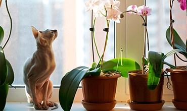 Как спасти орхидею, если корни сгнили или засохли?