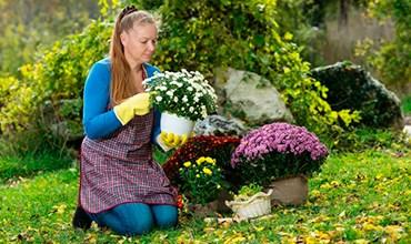 Какие цветы можно сажать и пересаживать в октябре?