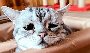 Что делать, если кот в стрессовом состоянии?