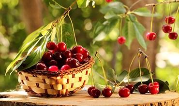 Топ-5 самых популярных и вкусных новых сортов вишни