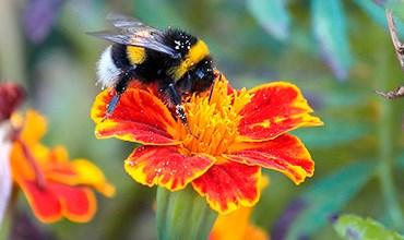 Как привлечь насекомых-опылителей в сад?