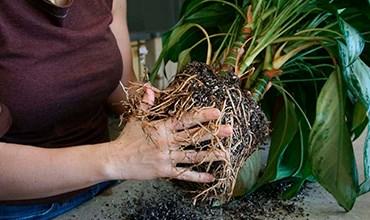 Как поливать растения с разными типами корневой системы?