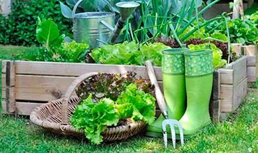 Какие цветы и овощи можно посадить в июле?
