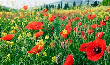Растения, за выращивание которых могут выписать штраф или посадить в тюрьму