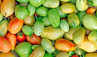 Что делать с зелёными помидорами? Дозревание и рецепты.