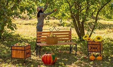 Чем и когда обрабатывать плодовые деревья осенью?