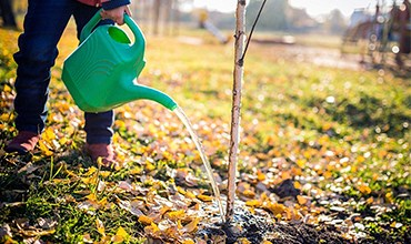 Влагозарядковый полив осенью.
