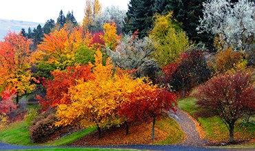 10 растений, которые украсят ваш сад осенью