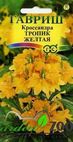 Кроссандра  Тропик желтая 3 шт - фото 13942