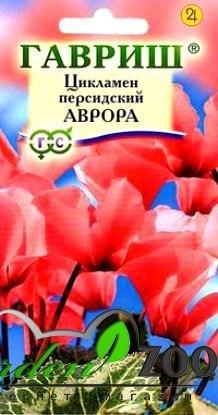 Цикламен персидский Аврора 3шт - фото 13945