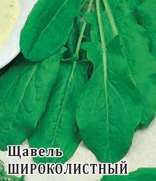 Щавель Широколистный