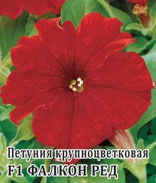 Петуния Фалкон Ред