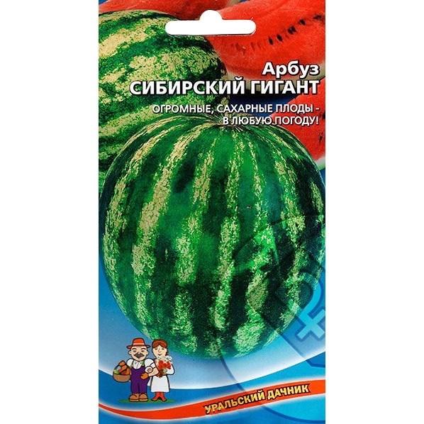 Арбуз Сибирский гигант 1гр - фото 51102