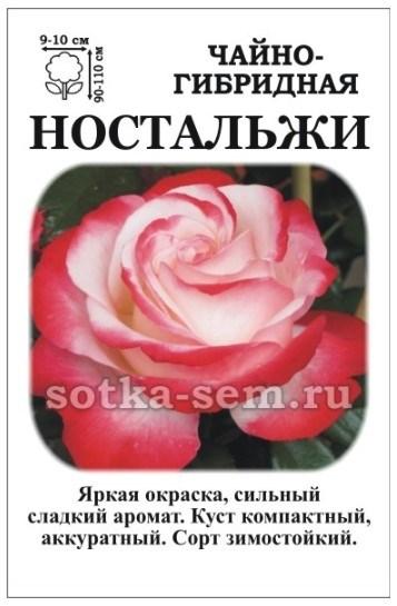 Роза Ностальжи - фото 52572
