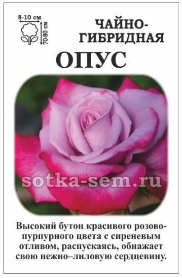 Роза Опус - фото 52574