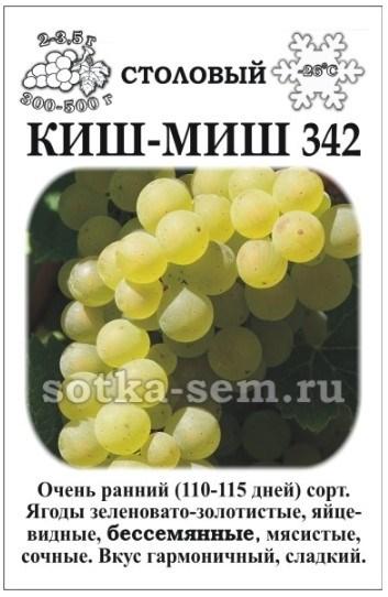 Виноград Кишмиш №342 - фото 52590