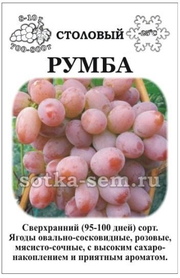 Виноград Румба - фото 52593