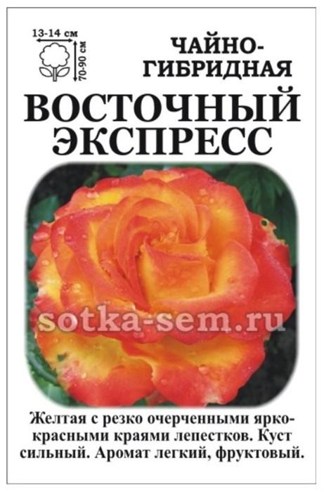 Роза Восточный Экспресс - фото 52856