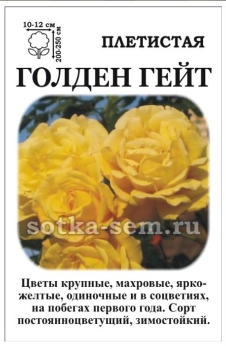 Роза Голден Гейт - фото 52858