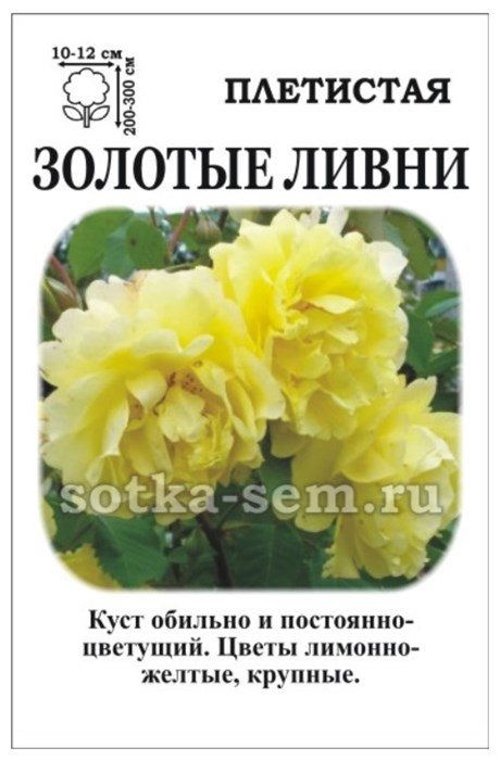 Роза Золотые Ливни - фото 52863