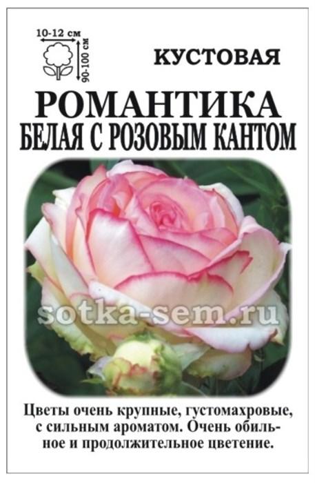 Роза Романтика Белая с розовым кантом - фото 52879