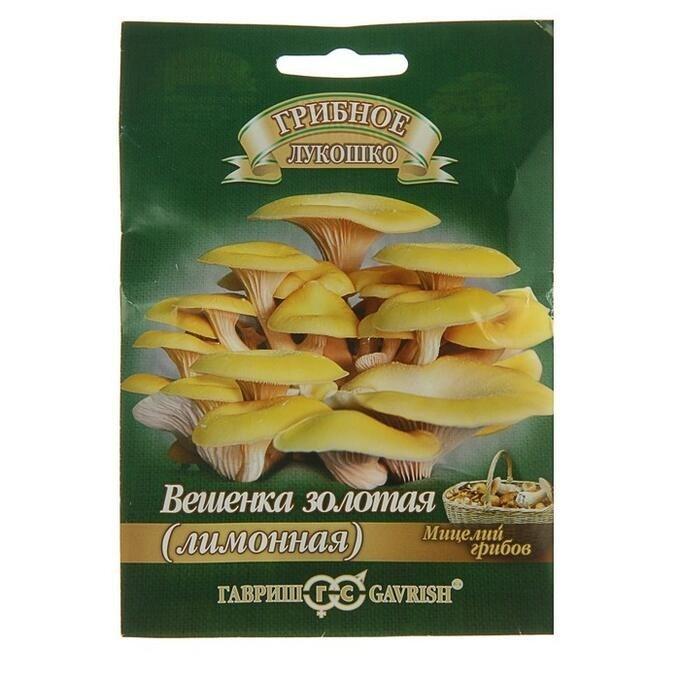 Вешенка золотая Лимонная на древесной палочке 12шт - фото 56068