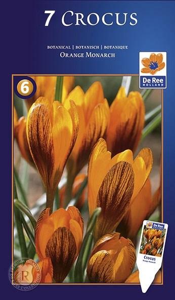 Крокус Оранж Монарх (7) - фото 61045