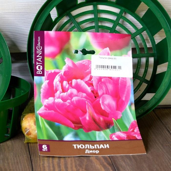 Тюльпан Диор (6) - фото 61056