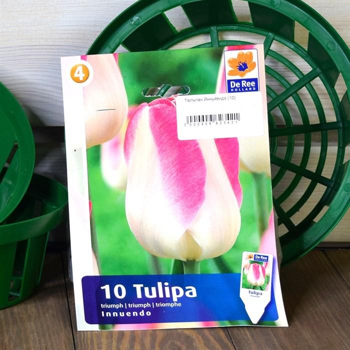 Тюльпан Йннуйендо (10) - фото 61058