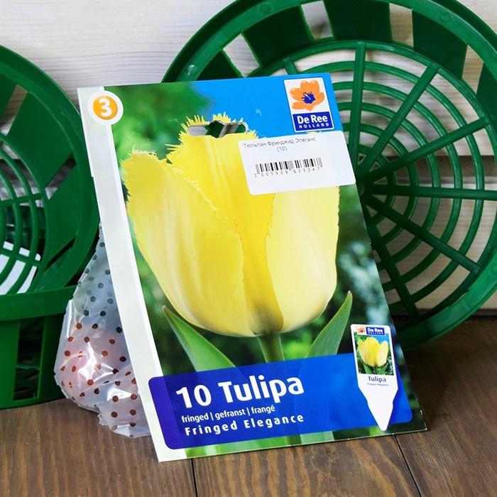 Тюльпан Фринджид Элеганс (10) - фото 61066